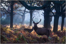 Sticker mural  A red deer stag in a misty forest in Richmond park, London. - Alex Saberi