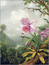 Sticker mural  Colibri perché sur une orchidée - Martin Johnson Heade