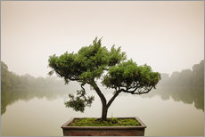 Tableau en plexi-alu  Japanese bonsai in zen garden