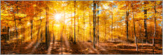 Sticker mural  Autumnal forest panorama in sunlight - Jan Christopher Becke