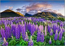 Sticker mural  Lupines at Arthur's Pas