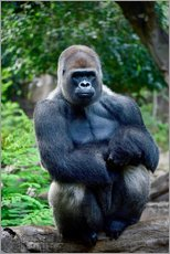 Sticker mural  silverback sitting on tree trunk - imageBROKER