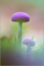 Sticker mural  Soft macro of two purple mushrooms - Mark Scheper
