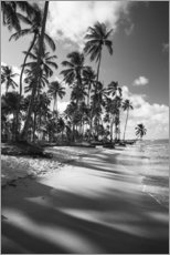 Tableau en plexi-alu  Tropical palm trees on a Brazilian beach in black and white - Alex Saberi