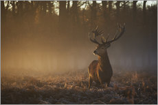 Sticker mural  Stag in autumn sunrise - Alex Saberi