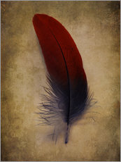 Sticker mural  Blue and red feather - Jaroslaw Blaminsky
