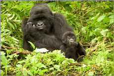 Sticker mural  Eastern Gorilla with baby between leaves - Joe & Mary Ann McDonald