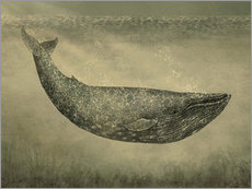 Tableau en plexi-alu  La Baleine - Terry Fan
