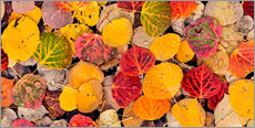 Sticker mural  Feuilles de tremble - Don Paulson