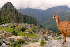 Sticker mural  Lama regardant le Machu Picchu - Don Mammoser