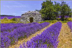 Toile  Stone hut in the lavender field - Jürgen Feuerer