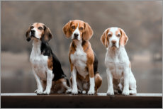 Poster Trio de beagles