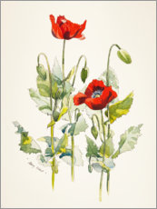 Tableau en aluminium  Coquelicots, aquarelle - Mary Want