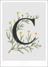 Poster  C is for Chamomile - Charlotte Day