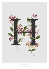 Poster  H is for Honeysuckle - Charlotte Day