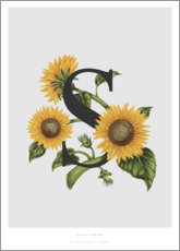Sticker mural  S is for Sunflower - Charlotte Day
