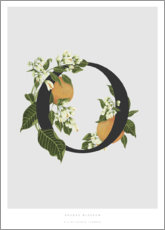 Poster O is for Orange Blossom