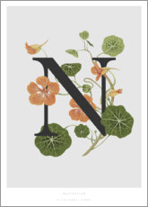 Poster N is for Nasturtium
