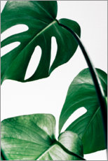 Poster  Monstera - Art Couture