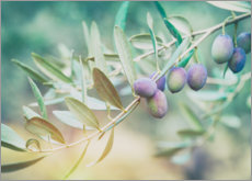 Poster  Branche d'olive juteuse