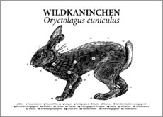 Poster Anatomie du lapin sauvage (allemand)