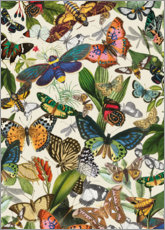 Poster Papillons exotiques
