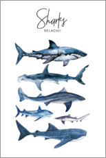 Poster  Requins - Art Couture