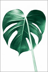 Poster  Monstera solitaire - Sisi And Seb