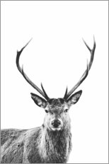 Poster  Cerf - Art Couture