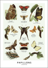 Poster  Papillons - Wunderkammer Collection