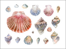 Poster Collection de coquillages en aquarelle