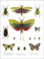 Poster  Couleurs des insectes I - Wunderkammer Collection