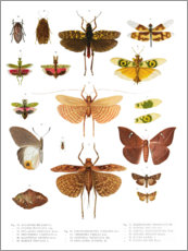 Sticker mural  Couleurs des insectes VI - Wunderkammer Collection