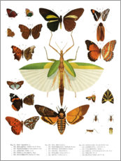 Poster  Couleurs des insectes IIX - Wunderkammer Collection