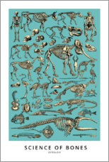 Sticker mural  Ostéologie (anglais) - Wunderkammer Collection