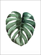 Poster  Philodendron (Monstera deliciosa) - Mantika Studio
