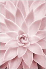 Poster  Plante succulente rose - Sisi And Seb