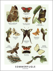 Poster  Papillons (danois)