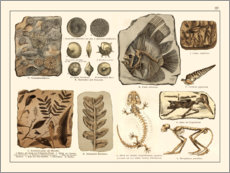 Poster  Fossiles I (allemand) - Wunderkammer Collection