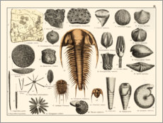 Poster  Fossiles II (allemand) - Wunderkammer Collection
