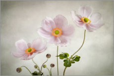 Poster  Anémones - Mandy Disher