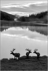 Poster  Parc national des montagnes Rocheuses - Jaynes Gallery