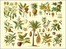 Poster  Classification de plantes tropicales (allemand) - Vision Studio