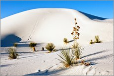 Sticker mural  White Sands National Monument - Transverse Dunes and Soaptree Yucca - Bernard Friel