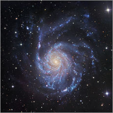 Sticker mural  M101, The Pinwheel Galaxy in Ursa Major - Robert Gendler