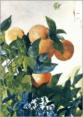 Tableau en plexi-alu  Oranges on a Branch - Winslow Homer