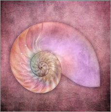 Tableau en plexi-alu  Sea shell - INA FineArt
