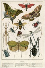 Sticker mural  Insects - English School