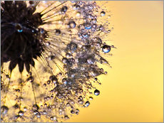 Tableau en plexi-alu  Dandelion yellow - Julia Delgado