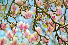 Tableau en plexi-alu  Magnolias look in the Spring - Julia Delgado